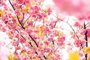 【ランナー募集中!】第1回ひかリノベ桜リレーマラソンinとしまえん開催のお知らせ