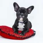 【ペットリフォーム①】愛犬と楽しく暮らす10のアイデア