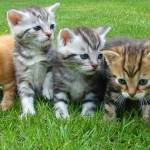 【ペットリフォーム②】大好きな猫と暮らすためのリフォーム案内