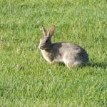 【ペットリフォーム⑤】ウサギとスマートに暮らす