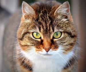 【台東区,墨田区,江戸川区エリアF様邸リノベーションレポート①】購入を即決!理想の街で猫と暮らす