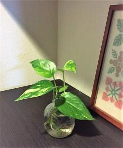 寒い冬でも簡単に育てられる植物
