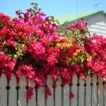 湘南の鮮やかな色彩を自宅で楽しむ。湘南ガーデニング事情