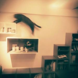 猫から、インテリアを考える