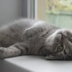 「ねこぐらし」のお悩み解消!猫ちゃんと安全に暮らすためのカーテン選び