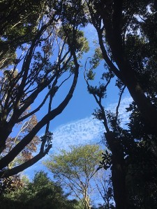 【湘南長沢グリーンハイツ②】自然と共存するベッドタウン・長沢