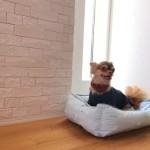 エコカラットと小型犬