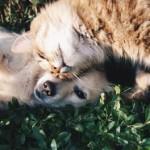 愛犬・愛猫と暮らす快適な住まい