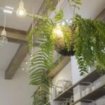観葉植物-min