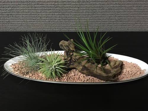 plants_7