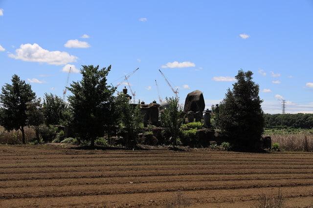 三芳町の畑