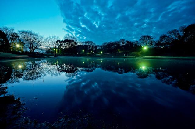 金山緑地公園 清瀬市 東京都の写真
