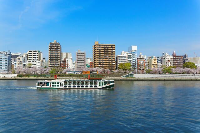桜満開の隅田公園と隅田川の遊覧船
