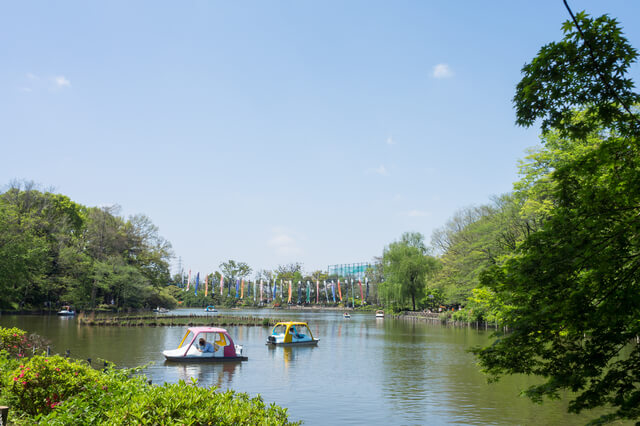 新緑の善福寺公園
