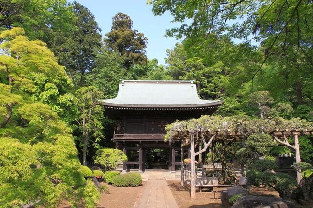 初夏の多福寺(山門)
