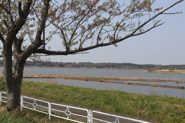 千葉県立印旛沼公園