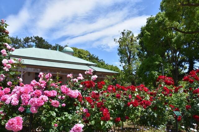 旧横浜ゴム平塚製造所記念館とバラの画像