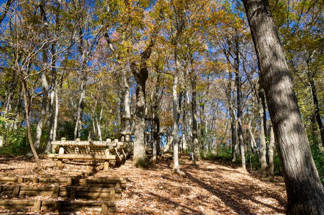 紅葉の野山北公園 あそびの森