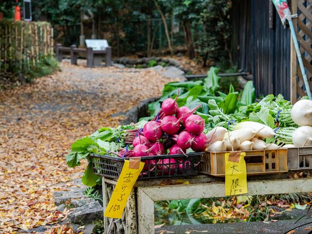 晩秋の湧水のあるお鷹の道の景色 野菜の無人販売所
