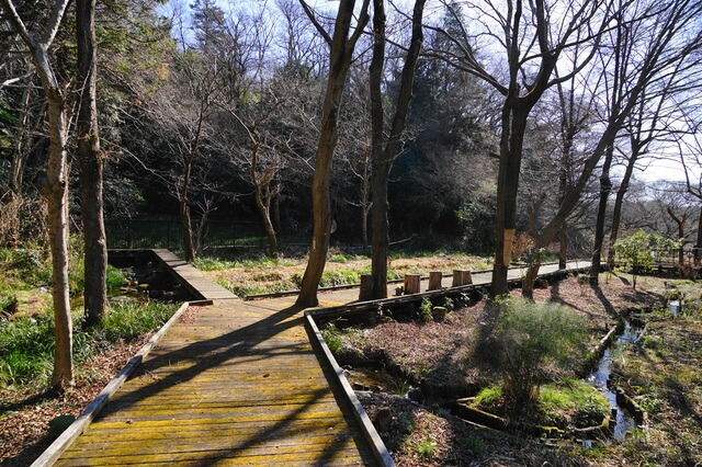 都立野川公園 自然観察園・自然観察センター