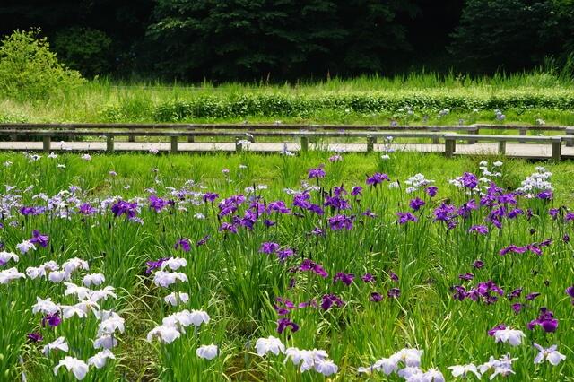 神代植物公園の園内